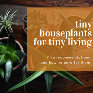 5 Tiny Houseplants for Tiny House Living