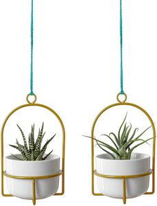 plants for tiny spaces