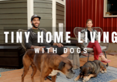 tiny house living with dogs
