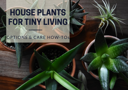 tiny houseplants_tiny living
